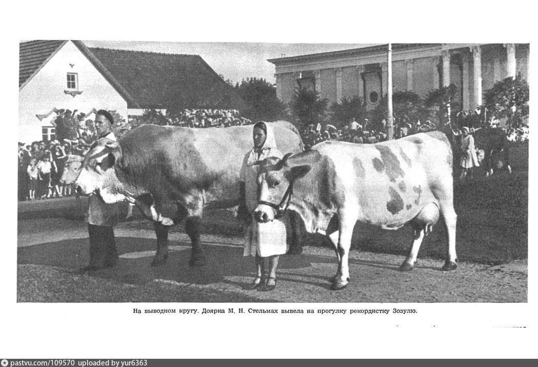 На выводном кругу ВСХВ, 1954