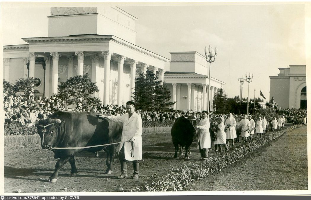 """Pavilhão """"Veterinária e Zootecnia"""" - Foto de 1954."""
