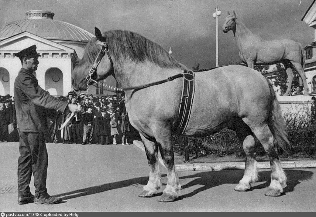 ВСХВ, у павильона «Коневодство», 1957