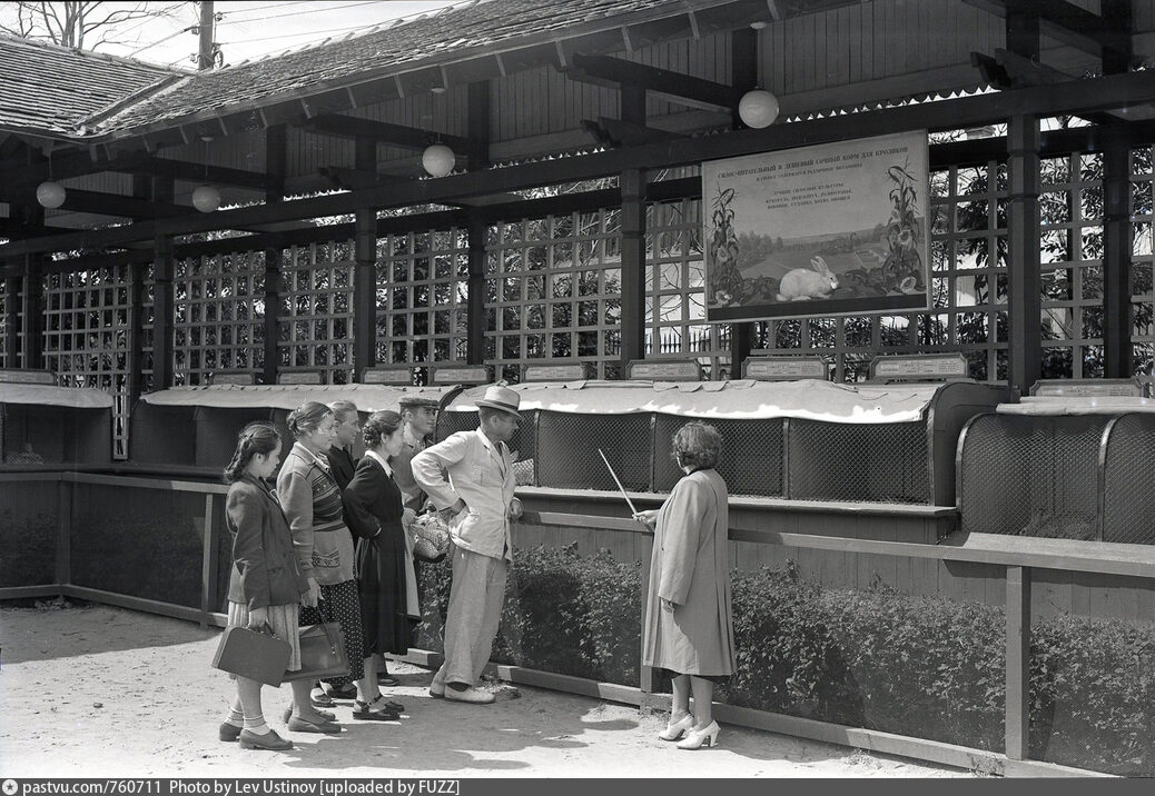 """Pavilhão nº 44 - """"Criação de coelhos"""", um dos muitos de temáticas pecuárias e agrícolas. Foto antiga do VDNKh"""